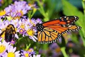 butterfly-776378_1920