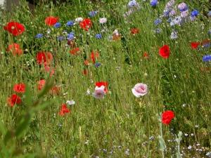 meadow-142156_1920