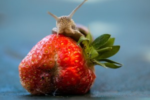 strawberry-1467471_1920