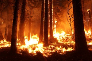 wildfire-1105209