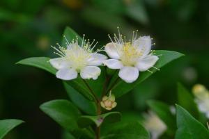 flower-1291003_1920