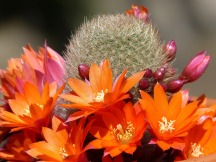 cactus-1369334_1920