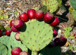 cactus-58415_1280