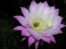 flower-1091246_1920