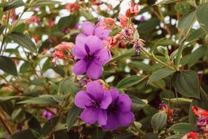 flower-940250_1920