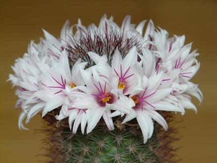 flowers-59885_1920