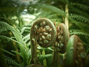 palm-fern-1367904_1920